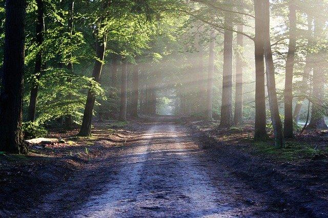 Medytacja las